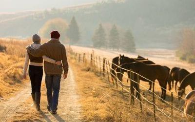 Paard & Partner
